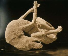 Муммифицированное тело собаки в Помпеях
